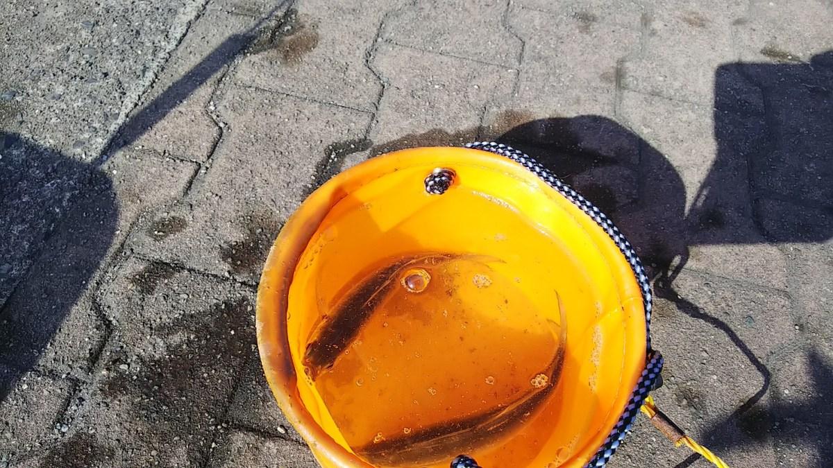 志布志港で鯵が釣れました(冬)