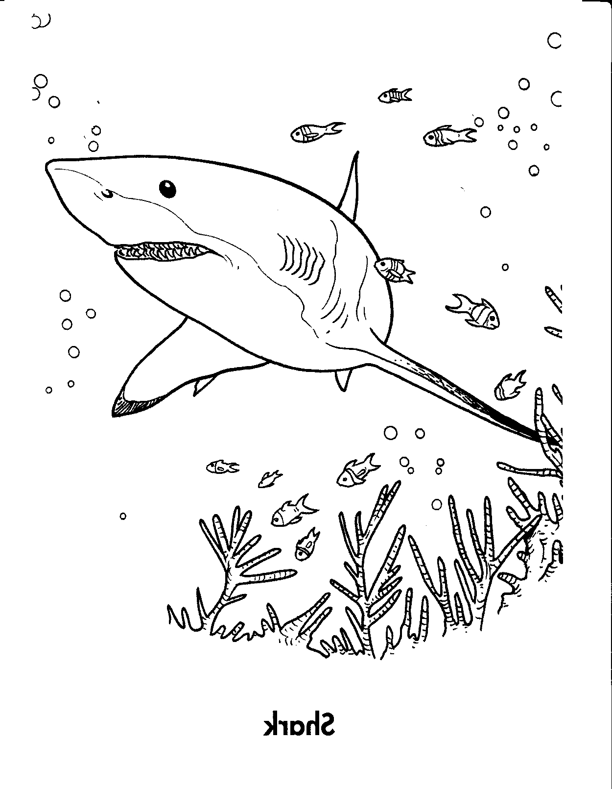 Great White Shark Coloring Pages To Print