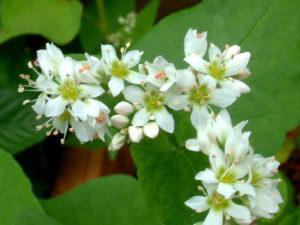 画像は「花と少年」より http://cat.s21.xrea.com/