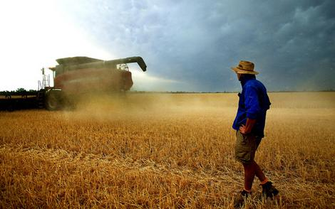 https://i0.wp.com/oklahomafarmreport.com/wire/news/2010/02/media/03203_AussieWheat.jpg