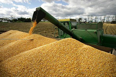 https://i0.wp.com/oklahomafarmreport.com/wire/news/2012/09/media/04698_cornharvest03132012.jpg