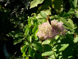 cvijece,vrt,leptir