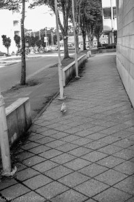 Due utenfor SR bank i Sandnes