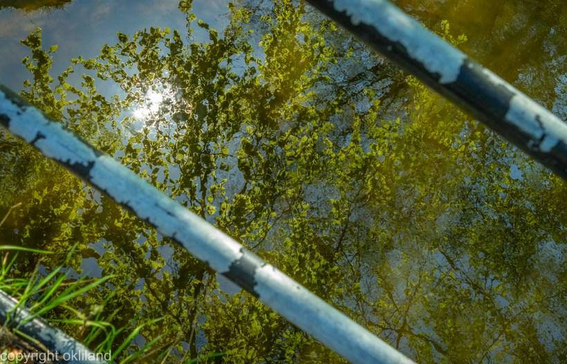 Speilbilde i Sandvedparken i Sandnes