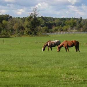 Heste Struktur
