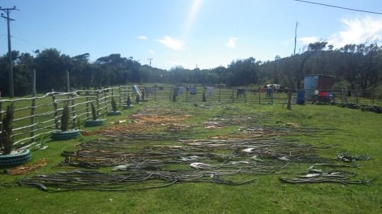Na otoku Chiloé sušena morska trava je jedna od uobičajenih prehrambenih namirnica