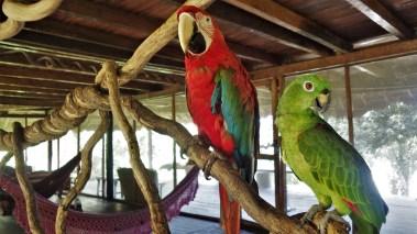Šarene papige odmaraju u glavnoj kući u rezervatu