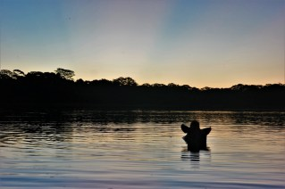 Tapir odmara u jezeru