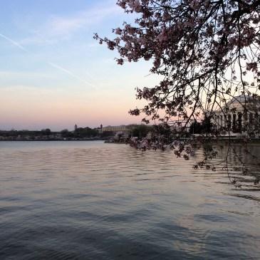 Vašington-kad zamiriše trešnja