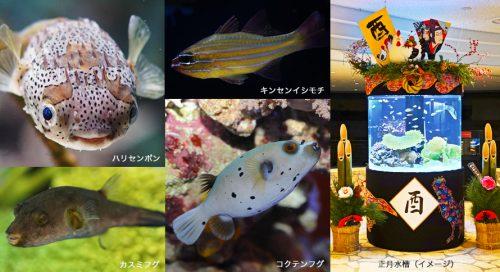 正月水槽イメージ(引用:美ら海水族館公式サイト)