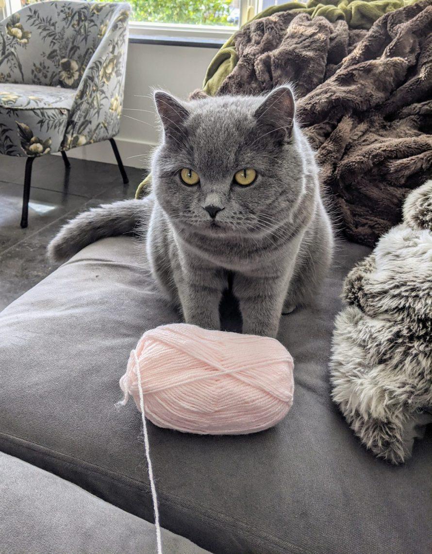 My cute pompom helper
