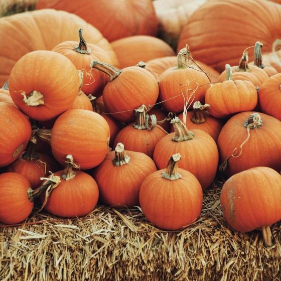 Oktoberdots informatie pompoenen vanaf wanneer kopen