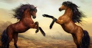 Atlar nasıl ayakta uyuyabiliyorlar?, OkuGit.Com - Tarih, Güncel, Kadın, Sağlık, Moda Bilgileri Genel Bloğu