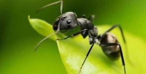 k5 3 300x152 - Yağmurda karıncalara niçin bir şey olmuyor?