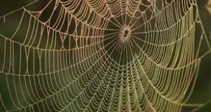 o5 300x160 - Örümcek ağının özelliği nedir?