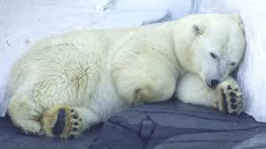 u 2 - Hayvanlar niçin kış uykusuna yatarlar?