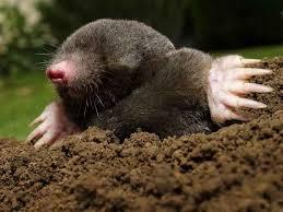 u4 1 - Hayvanlar niçin kış uykusuna yatarlar?