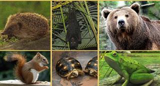 Hayvanlar niçin kış uykusuna yatarlar?, OkuGit.Com - Tarih, Güncel, Kadın, Sağlık, Moda Bilgileri Genel Bloğu