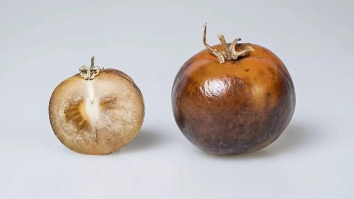 Genetiği değiştirilmiş domatesler Parkinson tedavisi için umut olabilir, OkuGit.Com - Tarih, Güncel, Kadın, Sağlık, Moda Bilgileri Genel Bloğu