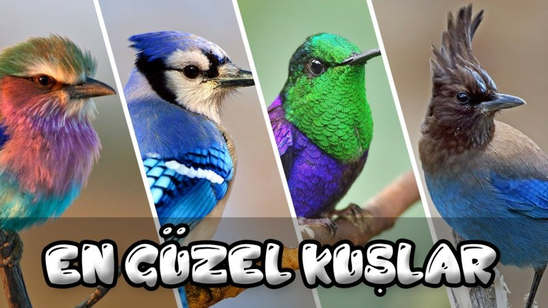 The Most Beatiful Birds – En Güzel Kuşlar