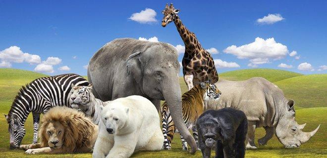 Hayvanlar Hakkında Bilmediklerimiz