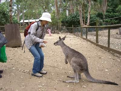 カンガルーに餌付けする妻