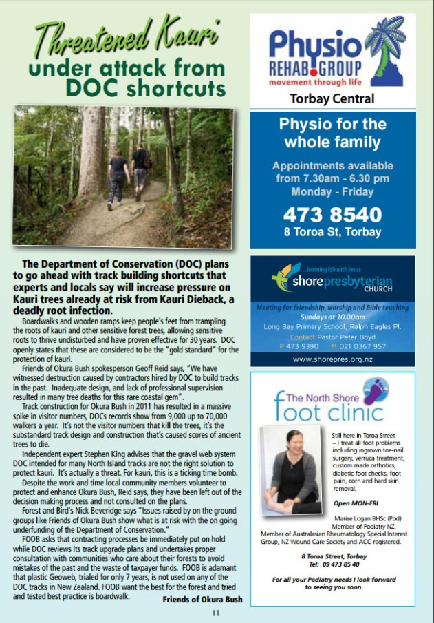 torbay-newsletter-threatened-kauri-under-attack-from-doc-shortcuts