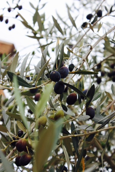 Olives or grapes?!