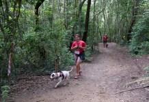 Localizado em São Roque, há 60 quilômetros da capital paulista, espaço paradisíaco receberá o famoso Treinão Premiado de Canicross Divulgação