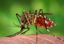 Seconci-SP traz dicas para evitar a proliferação da dengue