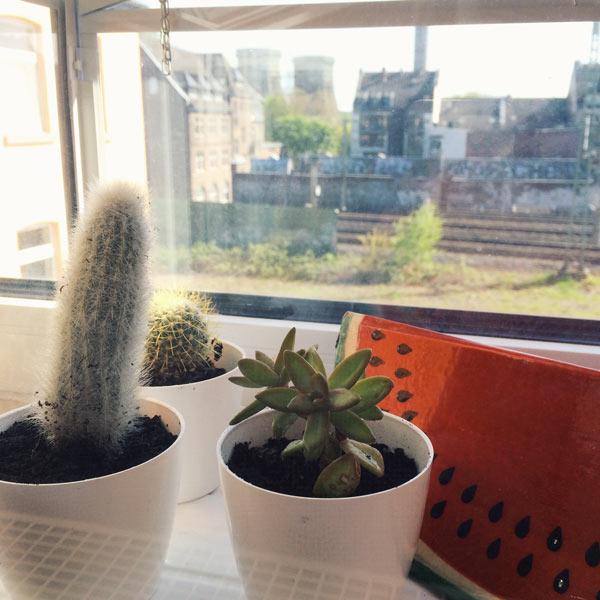 gardening mama cacti olamelama image