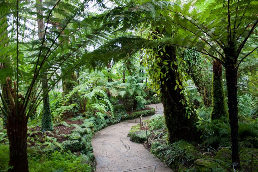 Voyage solo en Écosse à Édimbourg - Serres d'Edimbourg au Royal Botanic Garden