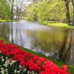 Gėlių, spalvų ir kvapų karalystė – Keukenhofo parkas