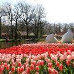 Rusija pradėjo deginti gėles iš Olandijos