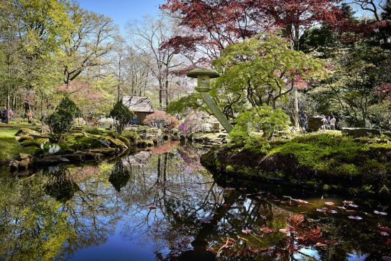 Den Haag, 1 mei 2016 - Dit weekeinde ging de Japanse Tuin in het Haagse park Clingendael weer open. De kleurrijke tuin is maar kort voor het publiek geopend en trekt ieder jaar weer veel bezoekers uit binnen en buitenland. Foto: Phil Nijhuis ------------------------------------------------------------ The Netherlands, The Hague, May 1st, 2016 - The Japanese Garden opened  for 6 weeks in the spring for visitors. Photo: Phil Nijhuis