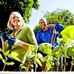 Dirbti į Olandiją – poromis