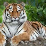 Zoologijos sodai Nyderlanduose