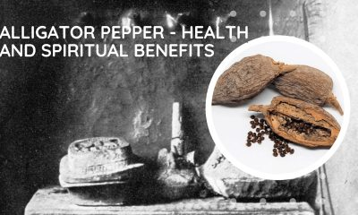 Alligator Pepper - Health and Spiritual Benefits