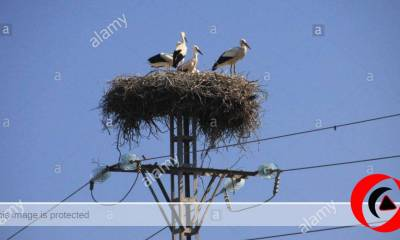 100 birds Electrocuted in Spain - Energy Giant Firm Sued