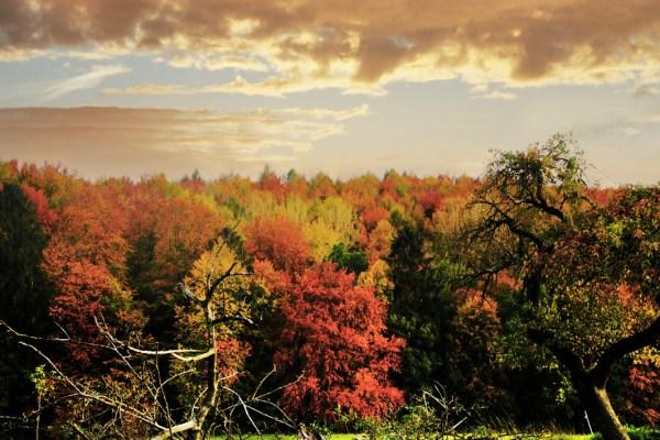 Einmal Herbst muss sein