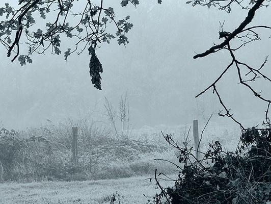 Traumfetzen-Grau. Ein November Tagebuch