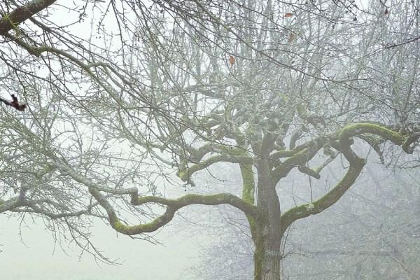 Nebel oder wie man ihn betrachtet