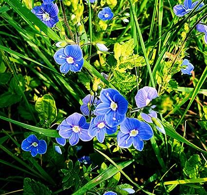 Blüten aus Wald und Wiese III