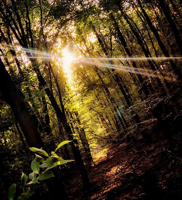 Waldpfad, sonnenbeschienen