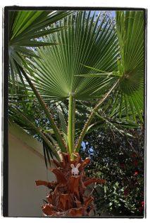 PalmClimbing