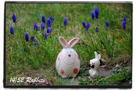 rabbit14