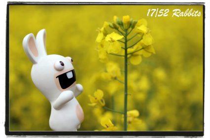 rabbit17