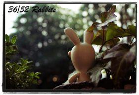 rabbit36