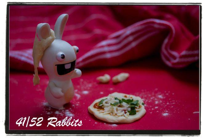rabbit41