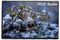 Rabbit49